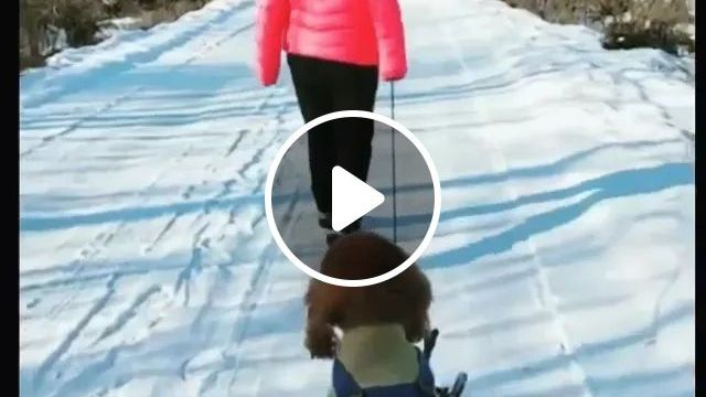 What A Way To Travel! - Video & GIFs | dog, snow, wood, winter, adorable