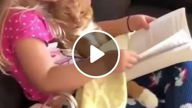 Cat Is Listening To Child Reading Fairy Tales In Living Room - Video & GIFs | animals, pets, cats, cat breeds, kids, children's fashion, living room, apartment furniture