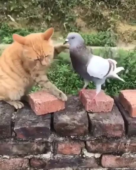 Why Can't We Be Friends - Video & GIFs   Yellow cats, smart birds, friendly animals, funny animals