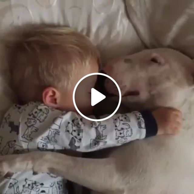 dog is always beside baby, Smart dogs, dog breeds, bed mattresses, cute babies, baby clothes