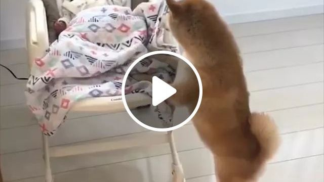 Don't Cry, Baby - Video & GIFs | Smart dogs, dog breeds, cute babies, rocking chairs, newborn shaking beds, friendly animals