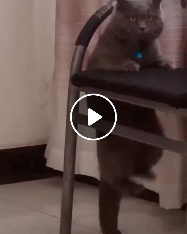 Ways Exercise Will Enhance Your Beauty - Video & GIFs | cat, fitness, chair, adorable, funny