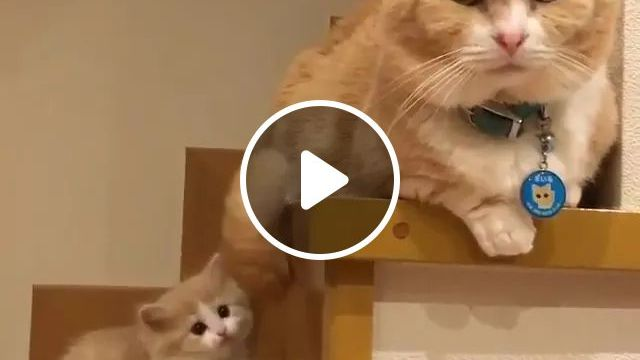 Dad And Daughter - Video & GIFs   cat, kitten, stair, adorable