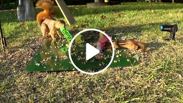 Squirrels Playing In Park - Video & GIFs | Smart squirrels, funny animals, delicious food