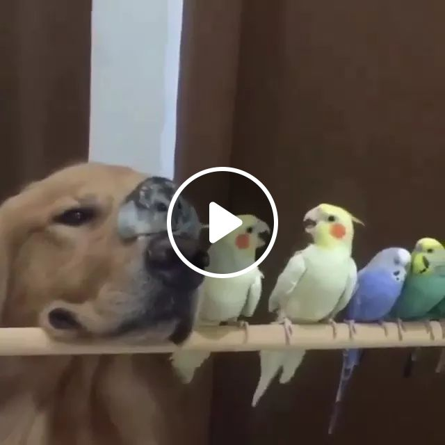 I've Had All Of Those Birds, And A Mouse And Dogs Lol - Video & GIFs | Cute bird, funny parrot, dog friendly, dog breeds