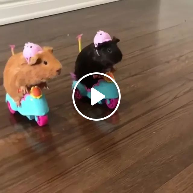Two Little Mice Drive Toy Motorcycle On A Wooden Floor - Video & GIFs   two small mice, driver, toy motorcycle, wooden floor, adorable