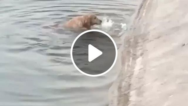 Dog..never Give Up - Video & GIFs   dog, water, swimming, smart, adorable