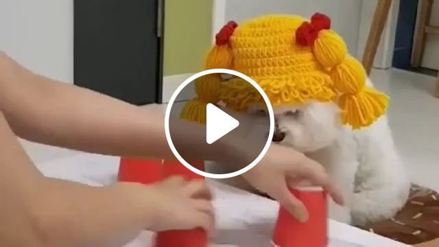 Smart Dog Finds Food In A Plastic Cup - Video & GIFs   Smart dog, food dog, funny animals, cute animals