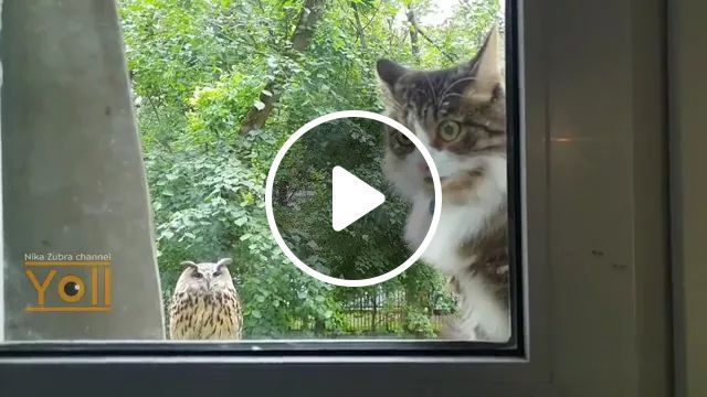Cat Was Surprised When He First Saw Owl At Kitchen Door - Video & GIFs   Cute cats, funny animals, cat breeds, kitchen doors