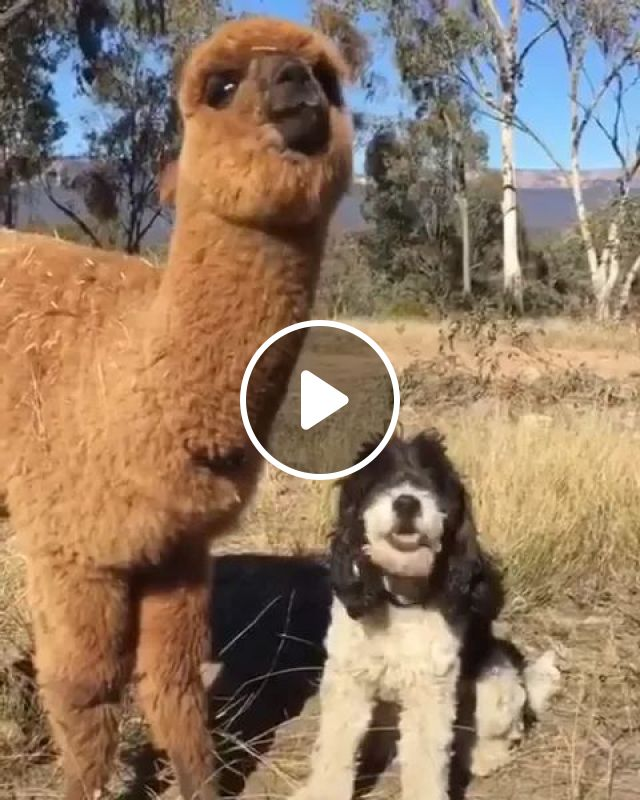 Dog And His Friend Are Very Cute - Video & GIFs | Cute dogs, dog breeds, animal friendly, pet care