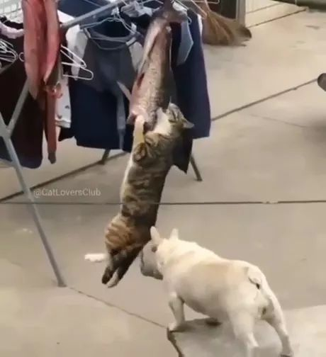 puppy helps cat get fish from rope