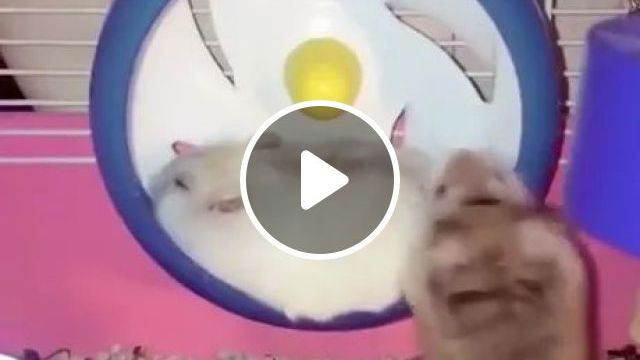 Get Outta Way!! - Video & GIFs | funny animals, smart mice, pet toys, pet care