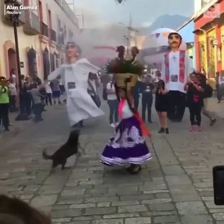 Dog and festival - Video & GIFs | Smart dogs, dog breeds, carnival, funny animals