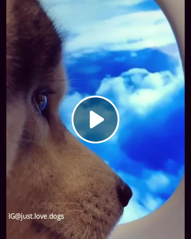 dog looked up at sky through television screen, Cute dogs, dog breeds, funny animals, TV screens