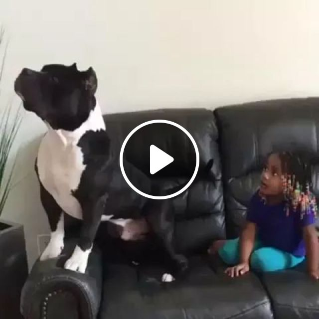 Not Sure Who Is Enjoying Movie Better - Video & GIFs   Smart dog, cute kid, baby fashion clothes, luxury sofa, living room furniture