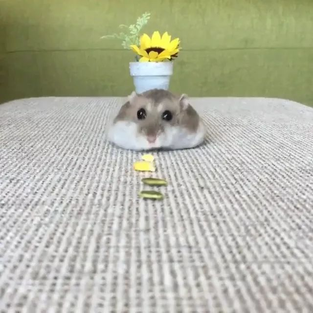 mouse likes nuts on the table in apartment