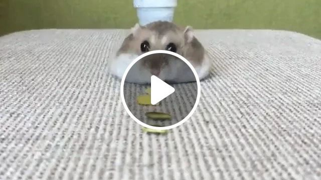 mouse likes nuts on the table in apartment, Mice, food, apartments, luxury apartments