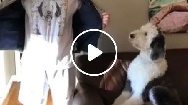In Living Room, Dog Is Very Happy To See His Owner Wearing A Dog Print Shirt - Video & GIFs | living room, sofa, dog, adorable, excited, see, owner, sport shoes, fashionable clothes, dog print shirt