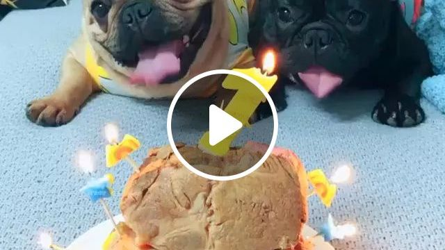 Happy Birthday One Year Old, Of Two Puppies - Video & GIFs | happy birthday, puppies, adorable, lovely, pet, frienly