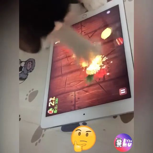 cat touches fruit on the tablet screen very quickly