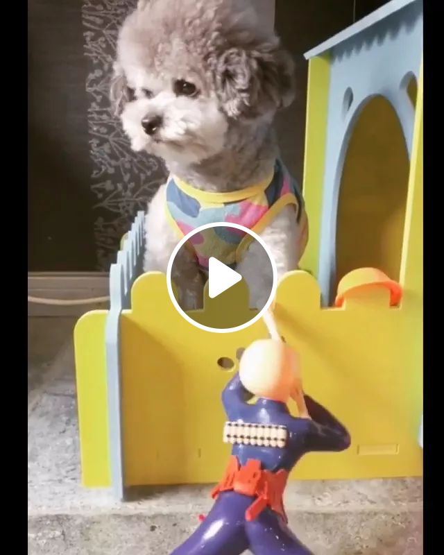 He's got lots of weird toys, Cute dogs, dog breeds, kids toys, pet clothes