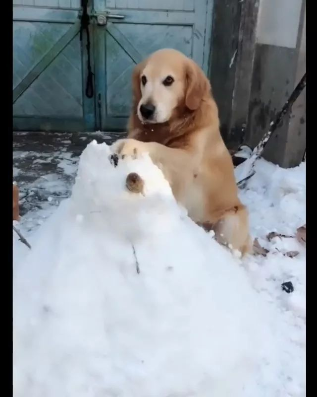 dog does not like snowmen