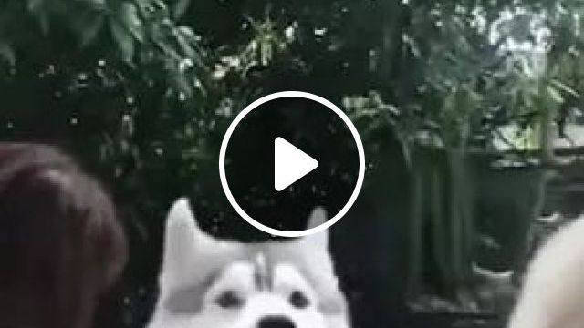 Girl Dropped Her Smartphone When Dogs Ran Near Her - Video & GIFs   girl, fashionable clothes, dropped, smartphone, dog, adorable, running