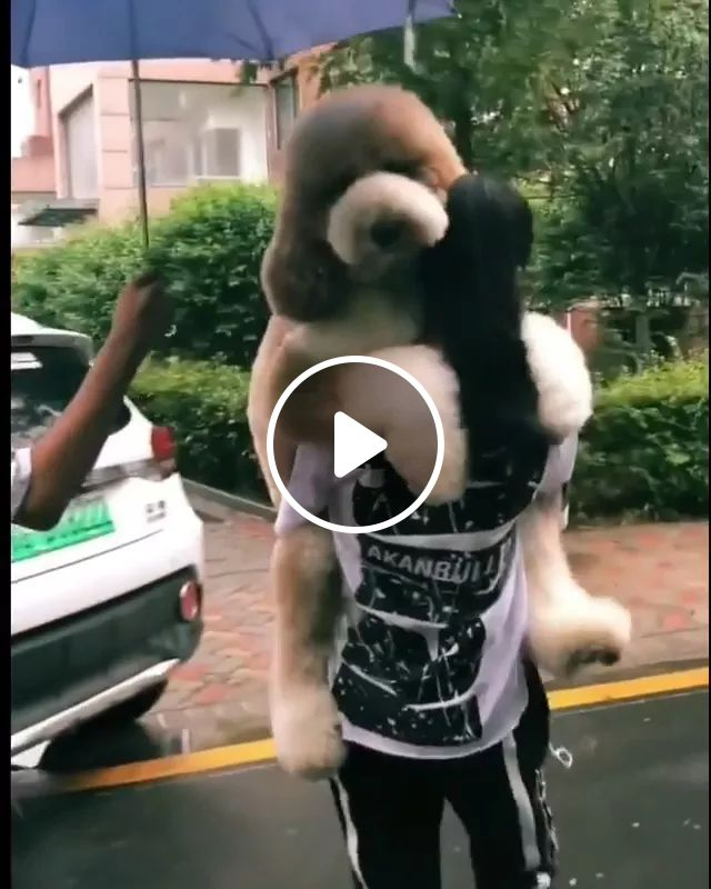 Giant Dog Is Carried By Girl - Video & GIFs | giant, dog, carried, girl