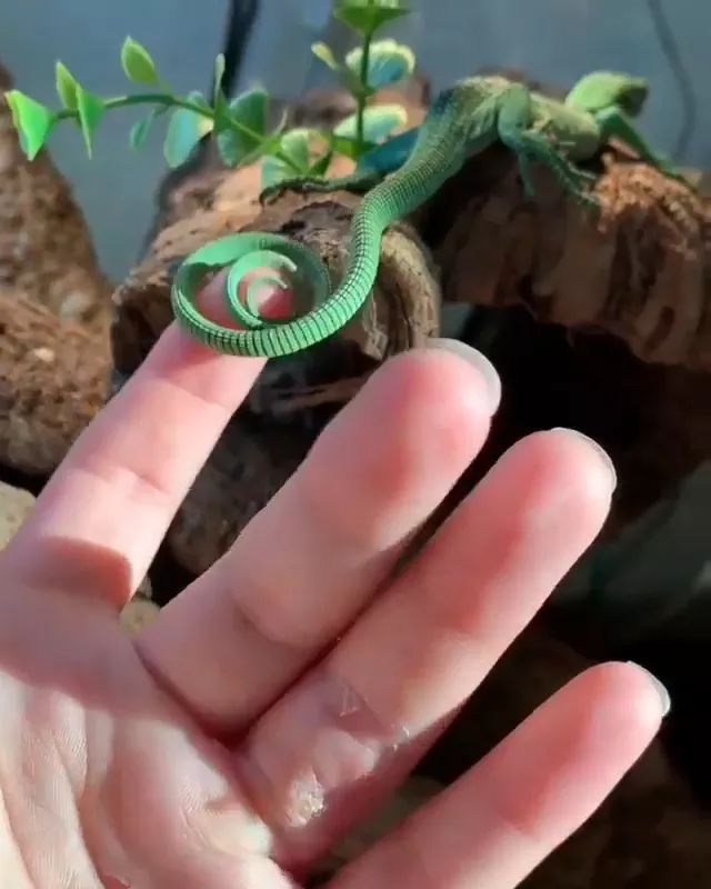 How cool is that Lizard Would you touch it