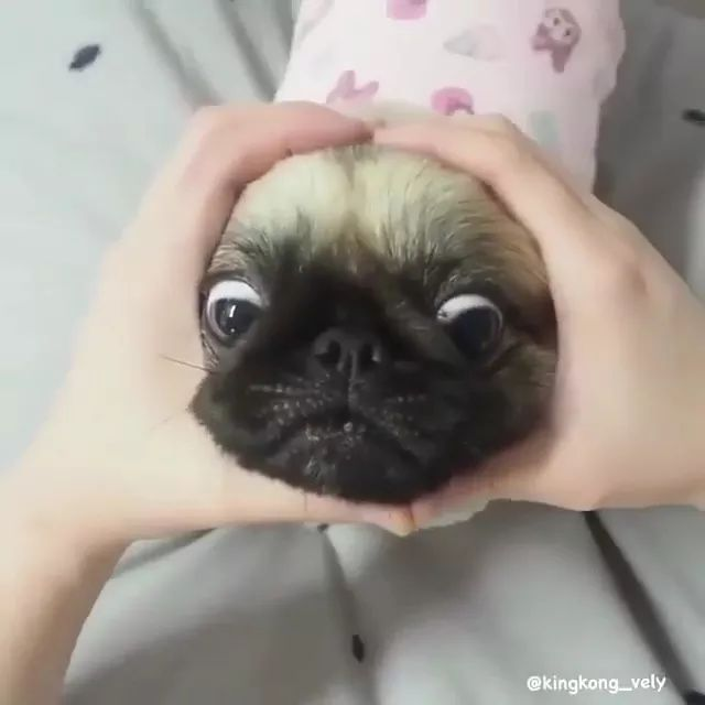 Dog with lovely face
