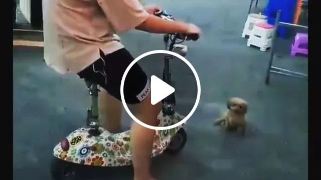 Brother, Stop! Take Me With You - Video & GIFs   Animals, Pets, cute dogs, dog breeds, singapore streets