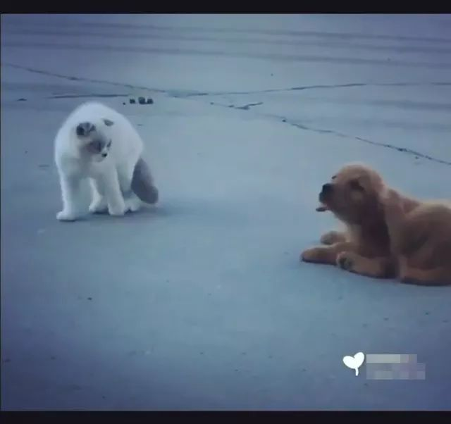 smart dog followed cat, acting very funny