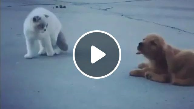 Smart Dog Followed Cat, Acting Very Funny - Video & GIFs | Smart dog, follower, cat, adorable, pet, animal, take action, very funny,