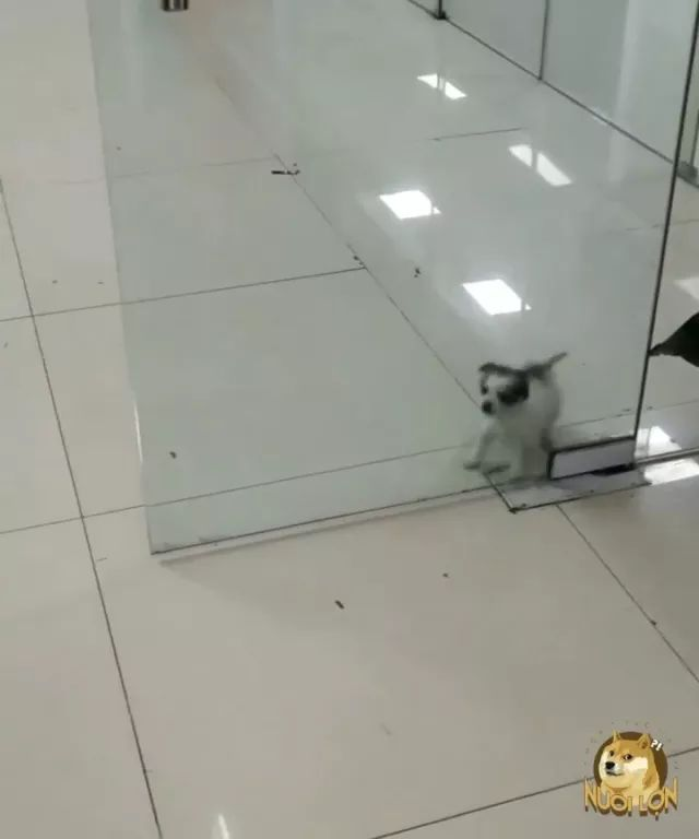 In commercial center, dog is looking for a way out