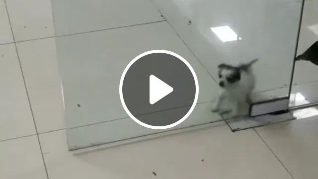 In Commercial Center, Dog Is Looking For A Way Out - Video & GIFs   shopping center, dog, adorable, pet care, health
