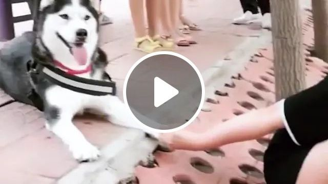 Smart Dog Helps Girl Not Fall Into Lake - Video & GIFs | smart, dog, helps, girl, fall, lake, friendly, pet