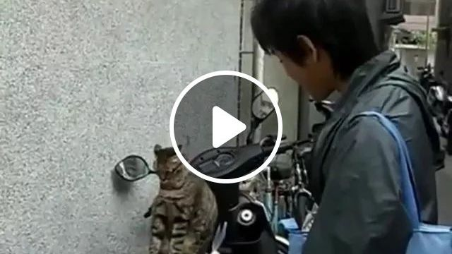 Cat Does Not Want To Leave Motorbike - Video & GIFs | cat, motorbike, adorable