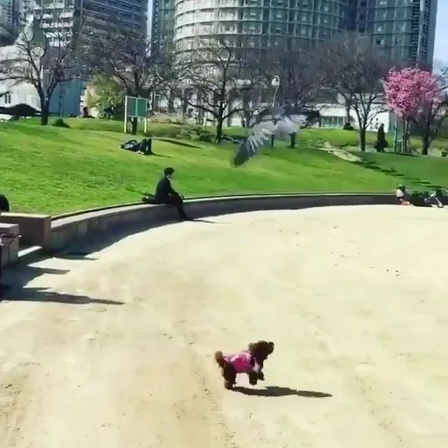 It seems cute puppy just needs to play with someone