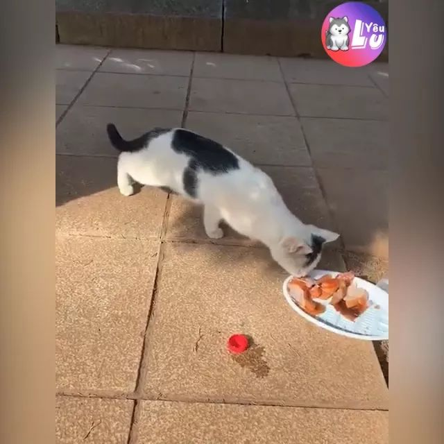 Cat likes good food - Video & GIFs | Funny animals, funny pets, smart cats, cute cats, delicious food