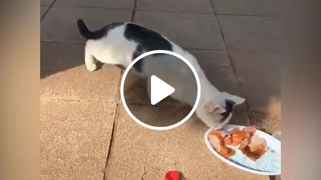 Cat likes good food, Funny animals, funny pets, smart cats, cute cats, delicious food