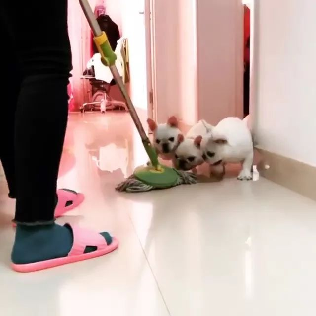 puppies also want to clean floor