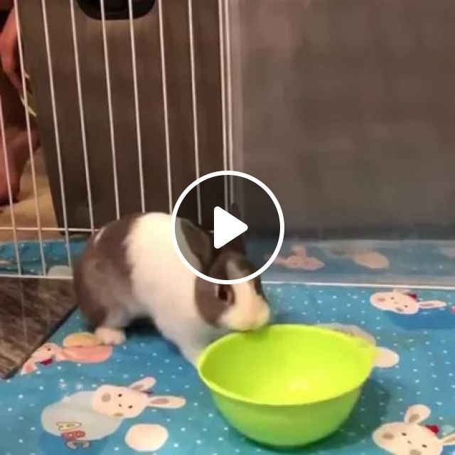 In Cage, Rabbit Likes To Play With Bowls - Video & GIFs   cages, rabbits, adorable, like, play, bowl