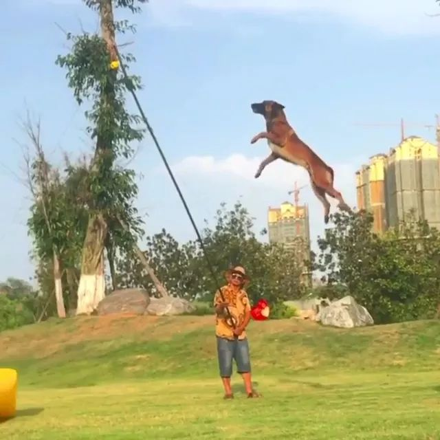 Surprisingly, dog jumped very high - Video & GIFs | surprisingly, amazing, dog, jumped, high