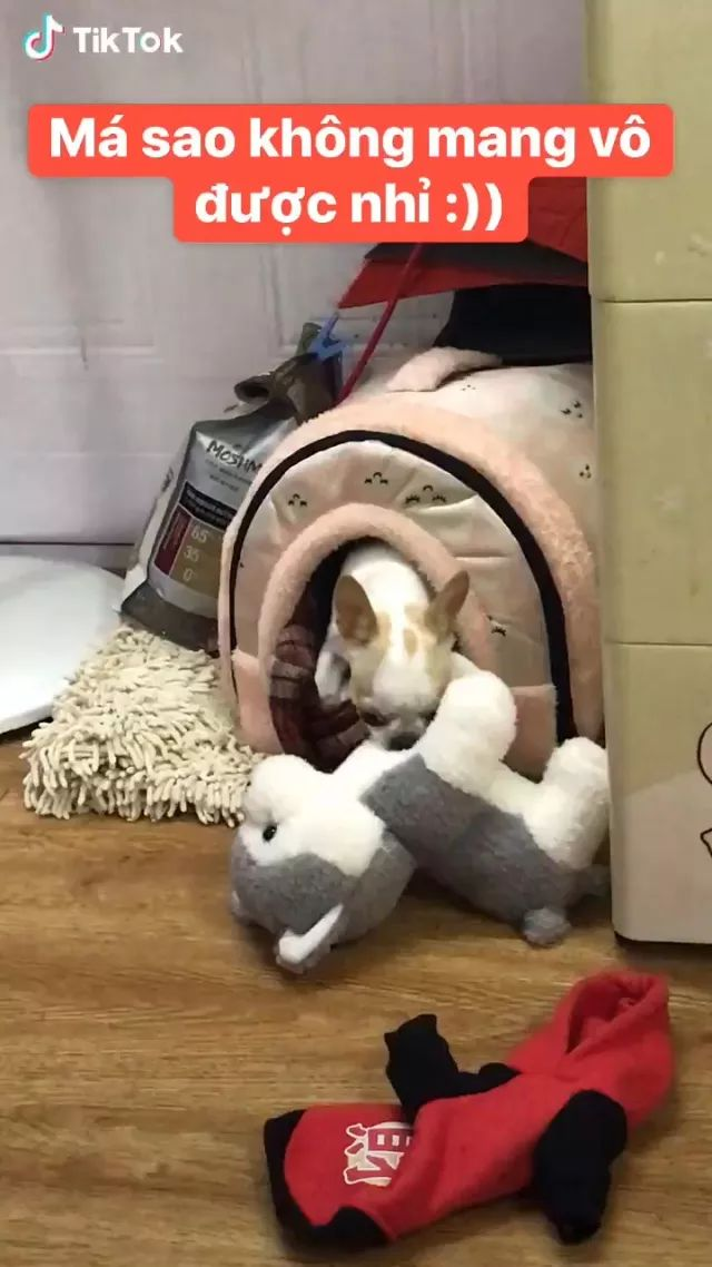 dog tried to pull stuffed animal into his house.