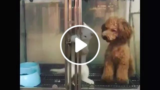 Smart Cat Helps Dog Escape Dog Stall - Video & GIFs   Smart cats, adorable dogs, funny animals, dog breeds