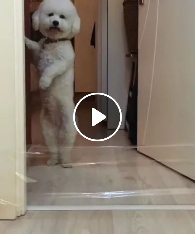 Smarter Dogs Or Cats - Video & GIFs | Dogs, cats, adorable, smarter, obstacles, pets, pet care