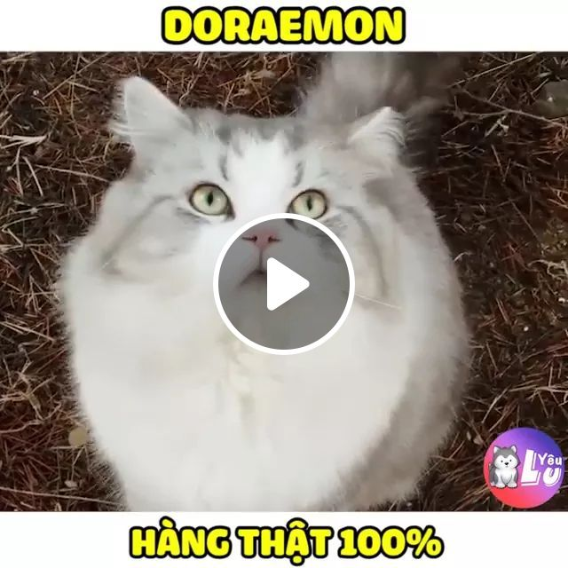 Cat Is Very Similar To Doraemon Cat Character - Video & GIFs | cats, animals, pets, cats doraemon, cat breeds