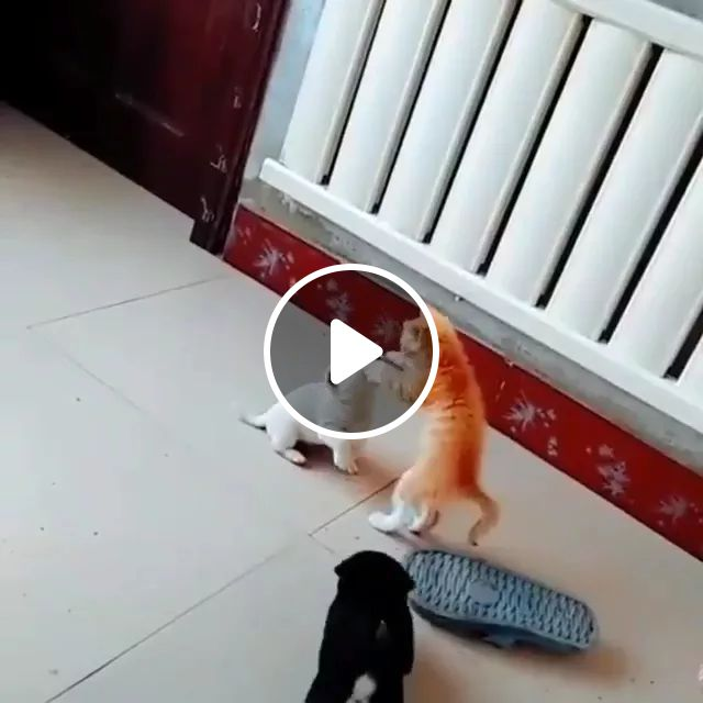 A Cute Fight And Humm Puppy Is So Patient - Video & GIFs   puppys, cats, kitty, adorable, animal, pets