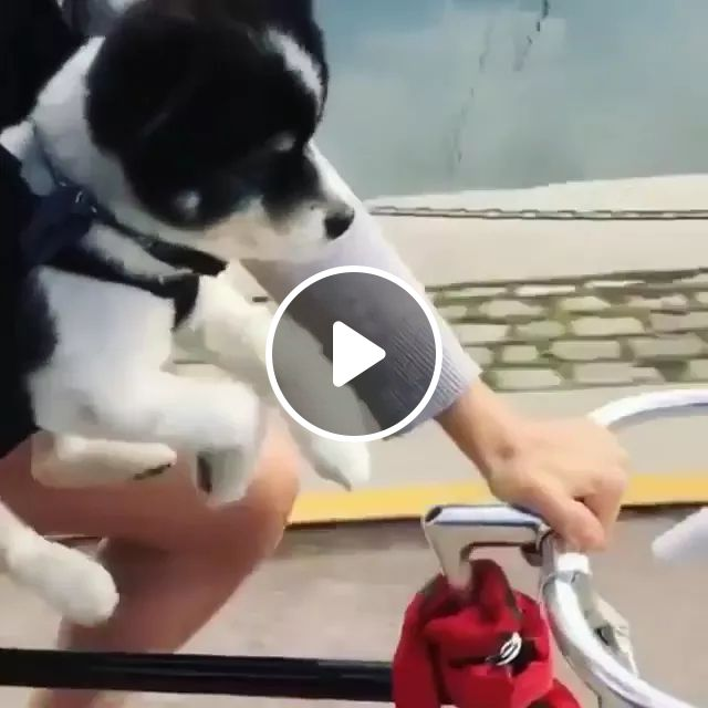 It seems this cute puppy is swimming instead of biking, Cute puppies, funny animals, American streets, American travel, sport bikes