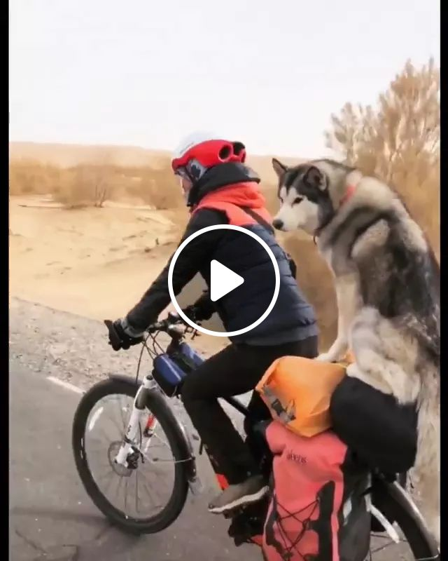 Dog Traveled With Her By Bike - Video & GIFs   dog, adorable, italy travel, girl, bicycle, helmet, road, bike, fashionable clothes, luggage